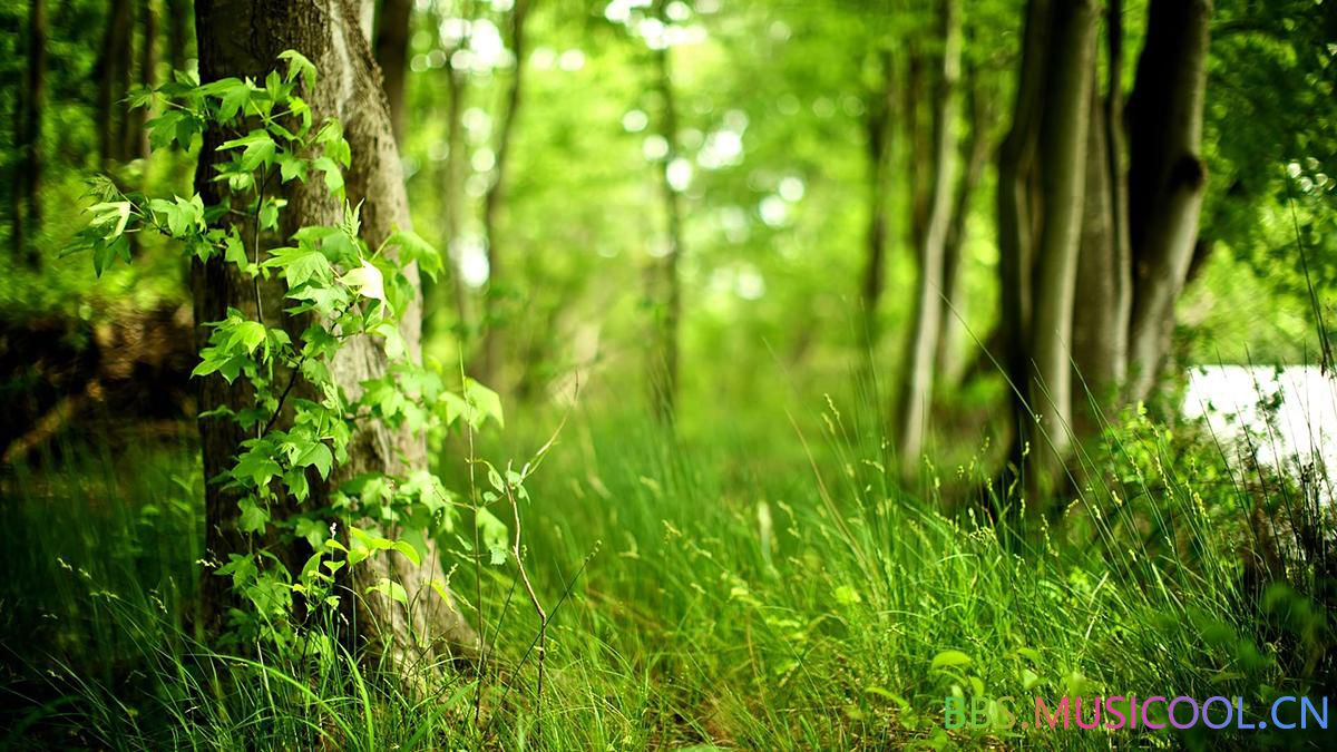 forest-background-hd-8704-9032-hd-wallpapers.jpg